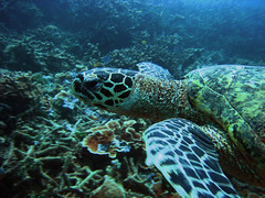 Up Close and Personal with the Hawksbill