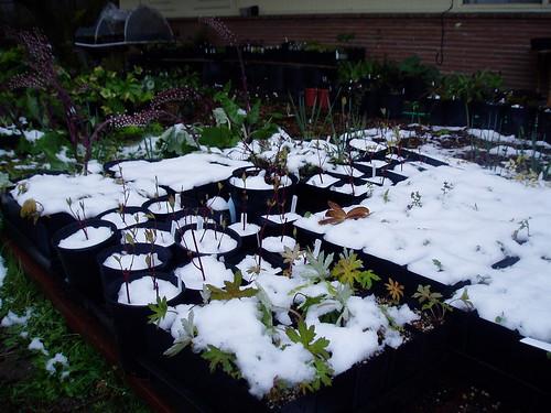 Nursery Under Snow