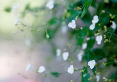 Morning haze (~Ella) Tags: flowers dof searchthebest bokeh depthoffield explore frontpage tamron2875mm morninghaze theperfectphotographer leonlovespink bokehwednesdayrules