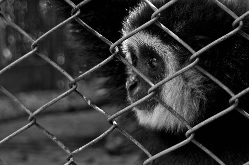 animal cruelty testing. animal testing cruelty