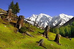 Roots (Mountain Nanga Perbat, Fairy Meadow, Pakistan) (Amir Mukhtar Mughal | www.amirmukhtar.com) Tags: trees pakistan snow green beautiful canon landscape stem scenic amir hunza fairyland fairymeadow amirphotography nangaperbat mountainnangaperbat