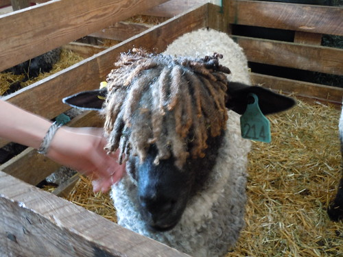 Rasta Sheep! MDSW 2011