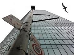 downtown bird (Mr.  Mark) Tags: deleteme5 deleteme8 sky toronto deleteme building deleteme2 deleteme3 deleteme4 deleteme6 bird deleteme9 deleteme7 glass up sign photo downtown saveme deleteme10 seagull perspective markboucher