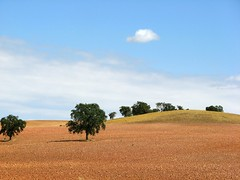Campos de Castilla / Lands of Castilla