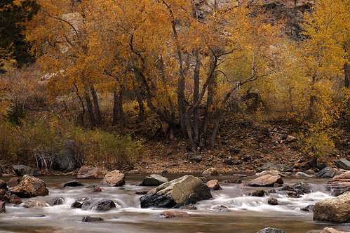 Fall on the Poudre River