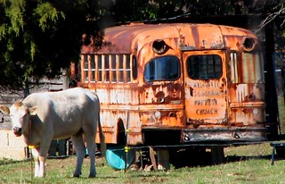 Old School Bus in Pasture