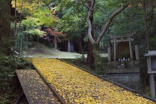 Imakumano Kannonji Temple (今熊野観音寺)