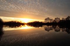 Lake Sunrise (torimages) Tags: england unitedkingdom glastonbury somerset sd allrightsreserved liquidgold donotusewithoutwrittenconsent copyrighttorimages