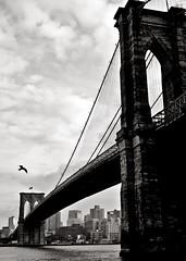 """The seagull's wings shall dip and pivot him"" (sadandbeautiful (Sarah)) Tags: bridge sky bw newyork bird brooklyn river seagull brooklynbridge hartcrane"