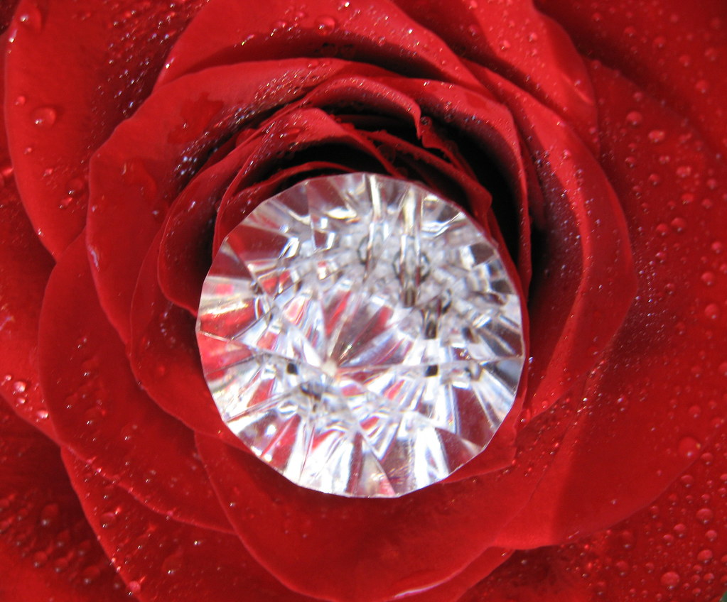 Multi-faceted red rose