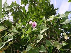 Grenada 7