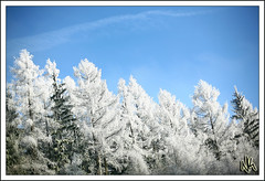 Dreaming of a White Christmas (i ea sars) Tags: christmas blue trees winter sky naturaleza snow storm cold tree nature beautiful les fairytale forest canon landscape 50mm woods scenery europa europe republic arboles czech prague snowy hiver nieve natur snowstorm scenic sunny prag bluesky praha praga tschechien bosque czechrepublic 5d dreamy canon5d invierno snowing firstsnow whitechristmas cinematic zima priroda praag prga ceskarepublika republicacheca canon50mm tsjechi canonef50mmf14usm  stromy  proda canoneos5d repubblicaceca eskarepublika eskrepublika snih  superaplus diamondclassphotographer flickrdiamond  larpubliquetchque csehkztrsasg