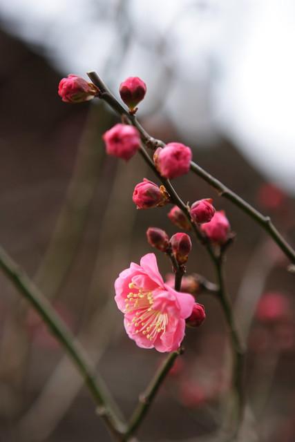 早春の兆候