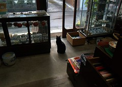Looking after the store (xxxkariyanxxx) Tags: door old city blue brown japan cat country gray   blak