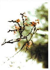 Blossom (ludwig van standard lamp) Tags: xpro experimental creativecommons hack zenit11 crossprocesed