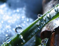 multiples (sweetbabyboy) Tags: macro green water canon leaf drops dew flare supermacro naturesfinest boheh canonpowershots3is flickrenvy diamondclassphotographer flickrdiamond