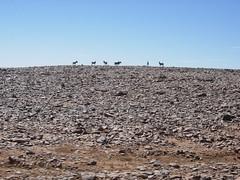 DSCN5643 (Sergio Conti) Tags: africa sahara algeria sand dunes dune afrika algerie animali vacanze deserto sabbia afrique jebel aljazair asini djebel