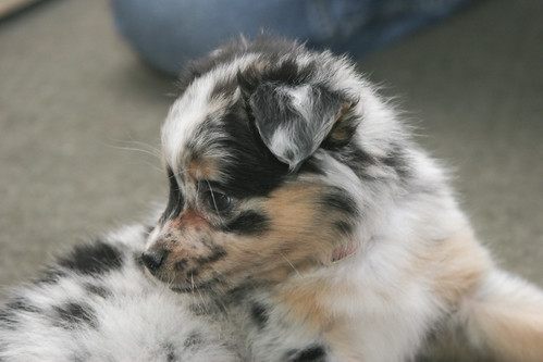 Puppy Face (by JnL)