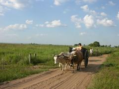 loma grande 1 (svmma) Tags: southamerica ox carro paraguay cart cordillera buey carreta suramrica bueyes boyero lomagrande