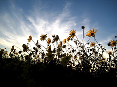 daisies #31 in exploreee ! (ashley rose,) Tags: blue sunset sky orange beach lines clouds canon walking colours newportbeach powershot ashleyrose saveearth sd750 canonpowershotsd750 ashleyrosex