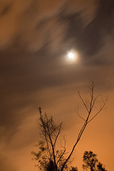 Celestial Beauty (Arnage) Tags: longexposure moon tree night movingclouds efs1785 400d wildlandscapes mtsamuel outshootingwithsam
