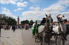 ESTAMPA (masaimanta) Tags: africa travel caballos breath maroc marrakech marruecos calesa magreb 5photosaday viejes lakoutoubia thebestofday gnneniyisi plazadejemmaelfna