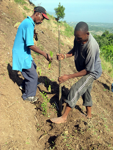 Tree planting in Haiti