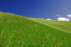 Sicilian countryside (Giuseppe Finocchiaro) Tags: italy green primavera landscape countryside spring nikon italia sicily fabulous sicilia nicosia mywinners abigfave aplusphoto diamondclassphotographer colourartaward theperfectphotographer goldstaraward spiritofphotography artedellafoto nikonflickraward