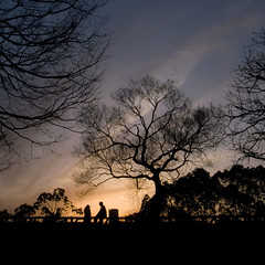 Shadow picture (tearoom) Tags: park sunset people tree silhouette japan osaka ricoh grd grd2 grdii
