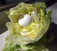 nestegg2 (blandsman) Tags: shadow with head egg lettuce inside