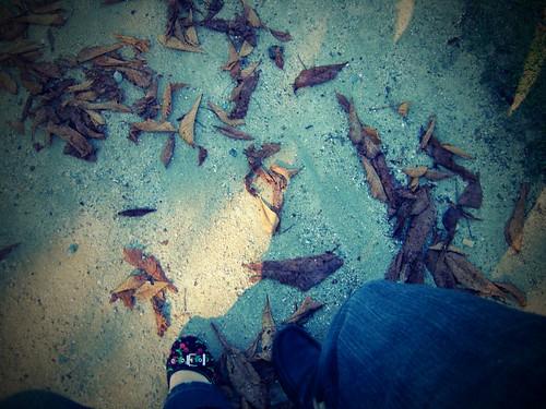 Autumn's cherries (walking together)
