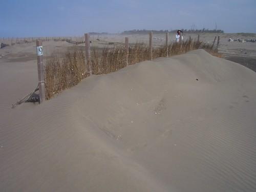 20071101護沙後的9號樁達到70cm高了