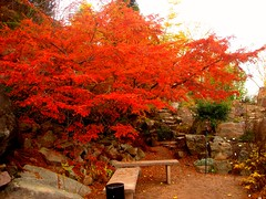 Autumn (kezwan) Tags: autumn red color tree nature thebigone botaniskatrdgrden encarnado kezwan