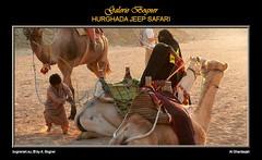 HURGHADA JEEP SAFARI (Albert ☺ bognerart.eu) Tags: sahara geotagged photo foto sonnenuntergang desert albert dune egypt hijab camel desierto egipto duna ägypten egitto bah hurghada düne kamel wüste deserto bedouin désert Ägypten beduini cammello hamada egy beduino égypte tele1 mısır jeepsafari bogner beduíno iso80 sanddüne çöl hammada beduinen pustinja camélido bédouins egipat camélidé sandwüste travelerphotos albertbogner bognerart ev12 artmemberssalzburg colors200000 bognerartcommentedpictures bognerartprizesmedalsandawards steinwüste alghardaqah felswüste rgb14011090 albahralahmar gouvernementrotesmeer muhafazatalbahralahmar alghurdaqah algurdaqa ilgardaga ilgurdaga geo2734 redseagovernorate Αίγυπτος mannaitours geo270337 geo27043366 geo27038413365542 desertodosaara Βεδουίνοι