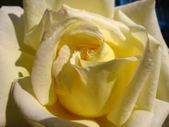 IMG_4193 (ali kangal) Tags: flowers friends flowerpower elegance flowermacro flowerscolors aplusphoto aclassphoto jeannysfoto greatflowermacros