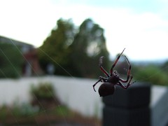 big spider 2