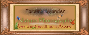Forest Wander Nature Photography Excellence Award