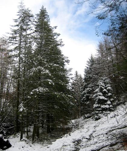 Kelburn trees in snow