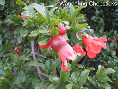 Pomegranates 2