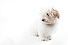 Ada on white