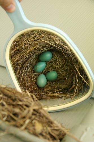 *four* eggs!!