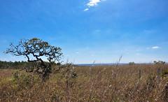 La solitudine (Claudia Oseki) Tags: road brazil sky tree nature braslia brasil landscape bush cloudy paisagem estrada goinia gois cloudys mygearandme