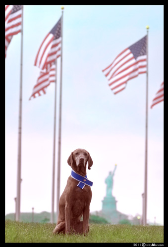 "The PAWtriotic Series - ""Give Me Liberty"" by staymor.com"