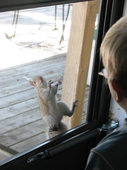 owen and squirrel