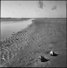 Seashells (annabelletexter) Tags: blackandwhite beach rolleiflex port coast texas seashell oconnor planar 28f