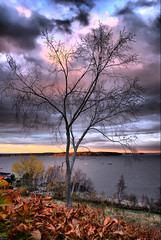 Fall Up (GlenFa) Tags: ocean autumn trees sunset sky color tree fall nature water colors leaves night clouds forest sunrise season portland landscape nikon maine d200 soe cascobay 25faves mywinners treesubject 1224nikkor wtmwchallengewinner theperfectphotographer