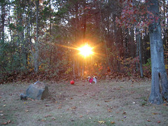 sunset (pondblue) Tags: autumn sunset dog sun cute fall basketball forest ball puppy happy woods view connecticut shihtzu ct sweatshirt poptart