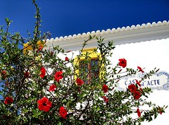 Happy Friday! (Claudia1967) Tags: flowers blue summer sky portugal bright algarve friday alte interestingness104 i500 explore20071116
