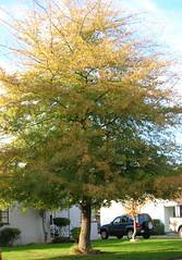 dustins-tree