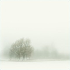 Sunday Mist (Olli Keklinen) Tags: mist color tree fog photoshop suomi finland square landscape helsinki nikon scenery sunday 100v10f images d200 photoart gettyimages 2007 questfortherest malmi palabra themoulinrouge 500x500 bsquare blueribbonwinner fivestarsgallery mywinners abigfave artlibre theexhibit ok6 anawesomeshot goldenphotographer treesubject theunforgettablepictures ollik impressivemood theperfectphotographer tup2 20071122 theexhibitupstairs 100commentgroup